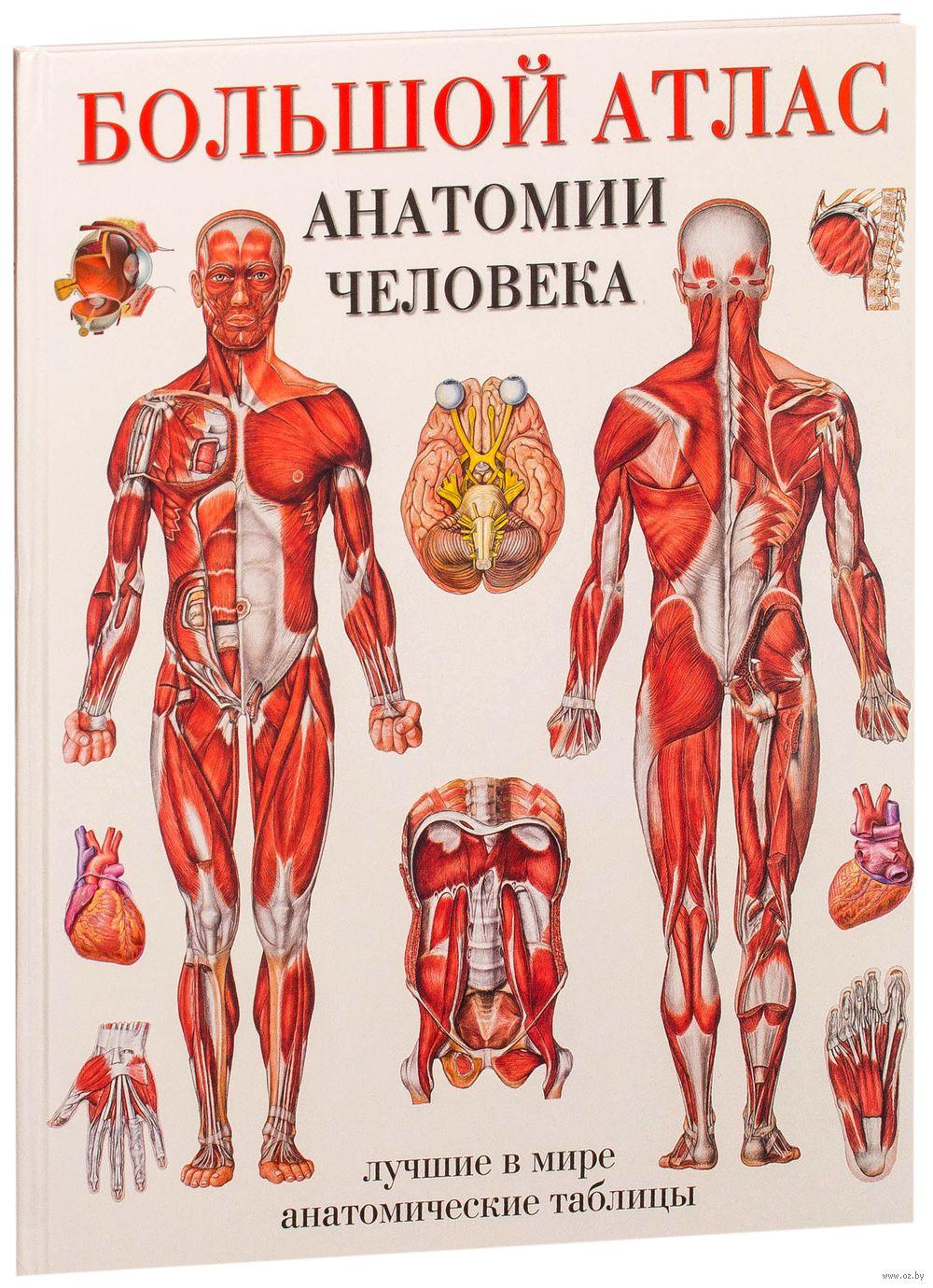 04062b0c52a3 Учебник Анатомия Человека Для Мед Вузов ...