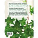 Лианы и вьющиеся растения в доме — фото, картинка — 1