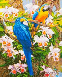 """Картина по номерам """"Попугаи"""" (500x650 мм; арт. MMC045)"""