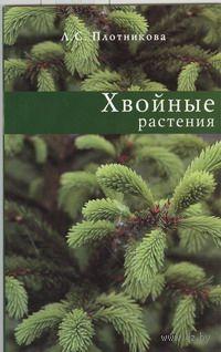 Хвойные растения. Л. Плотникова