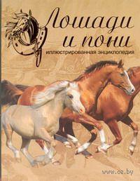 Лошади и пони. Иллюстрированная энциклопедия. Сэнди Рансфорд