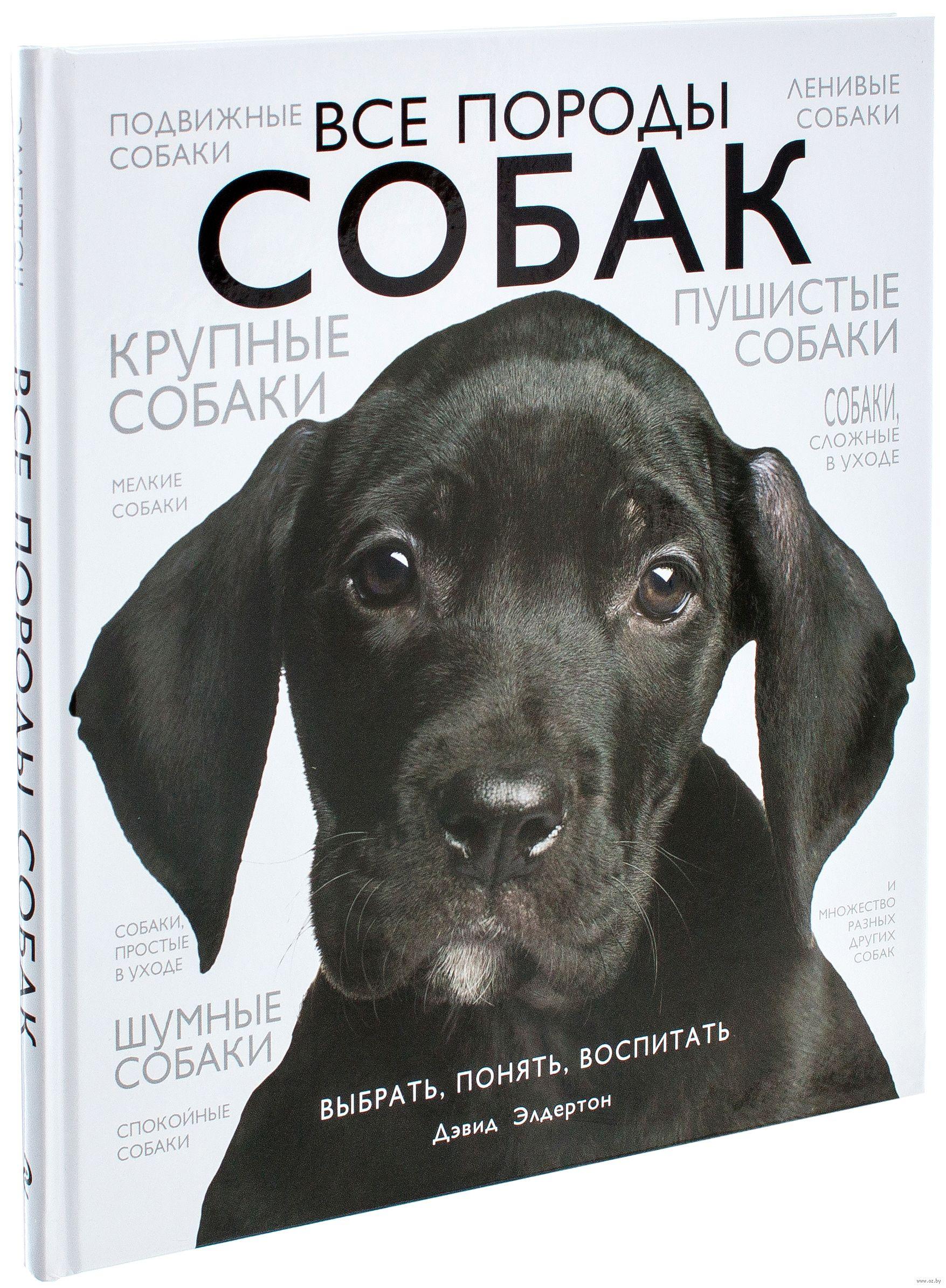Собаки для детей породы название. Собака для ребенка. Лучшие ... | 2389x1755
