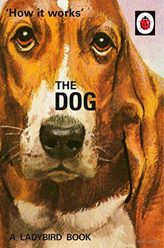 the dog class notes The curious incident of the dog in the night-time study guide contains a biography of mark haddon, literature essays, quiz questions, major themes, characters, and a full summary and analysis.
