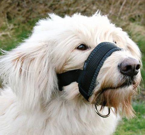 Недоуздок для собак нейлоновый регулируемый (размер XL, 23-34 см/20-30 см, арт. 19282)