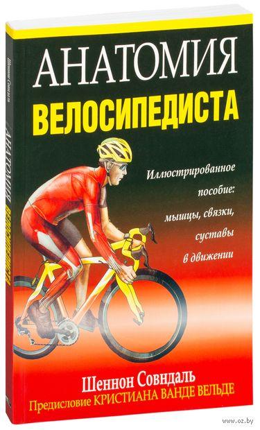 Анатомия велосипедиста — фото, картинка