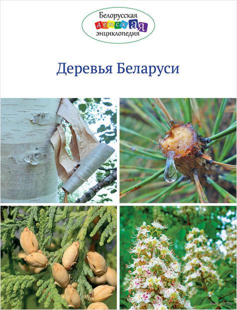 Деревья Беларуси — фото, картинка
