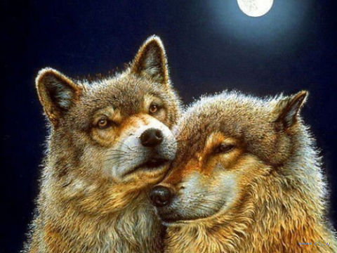 "Алмазная вышивка-мозаика ""Волк и волчица"" (600х450 мм) — фото, картинка"