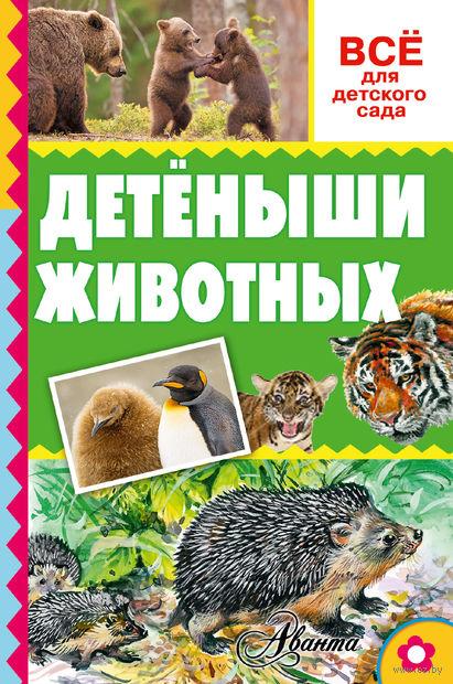Детеныши животных. Александр Тихонов