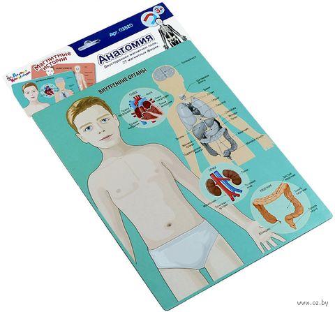 Магнитная игра. Анатомия — фото, картинка