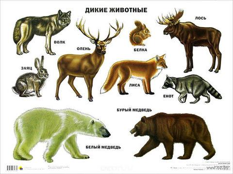 Дикие животные. Плакат