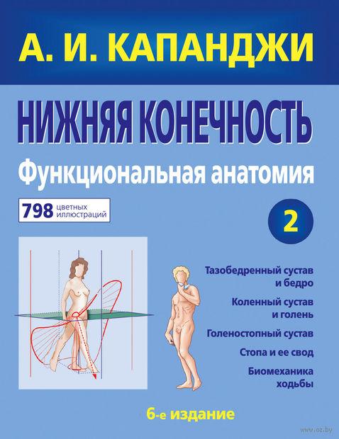 Нижняя конечность. Функциональная анатомия — фото, картинка