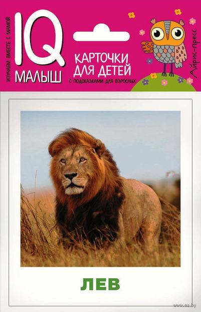 Животные жарких стран. Набор карточек для детей — фото, картинка