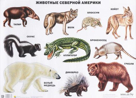 Животные Северной Америки. Плакат — фото, картинка