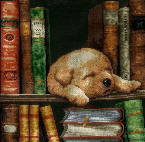 """Вышивка крестом """"Собачка, спящая на книжной полке"""" (200x260 мм) — фото, картинка"""