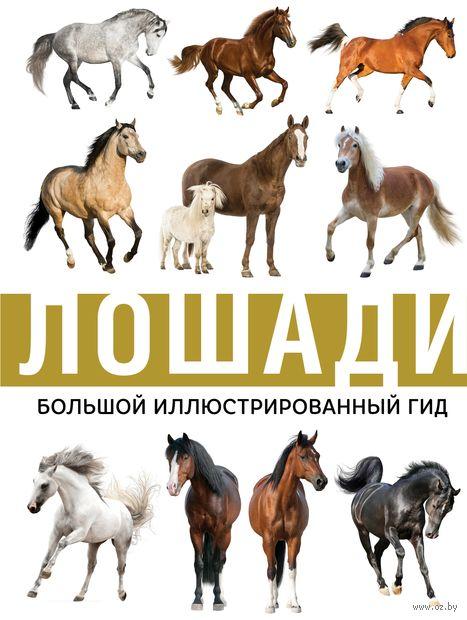 Лошади. Большой иллюстрированный гид — фото, картинка