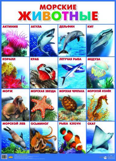 Плакат. Морские животные — фото, картинка