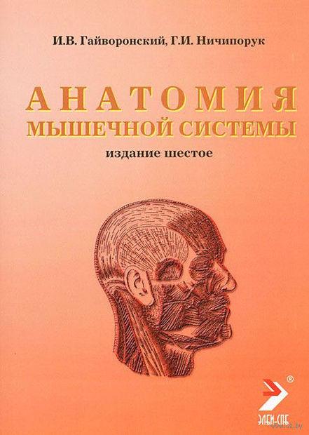 Анатомия мышечной системы. Иван Гайворонский, Геннадий Ничипорук