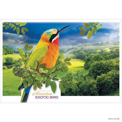 """Альбом для рисования А4 """"Животные. Тропические птицы"""" (8 листов)"""