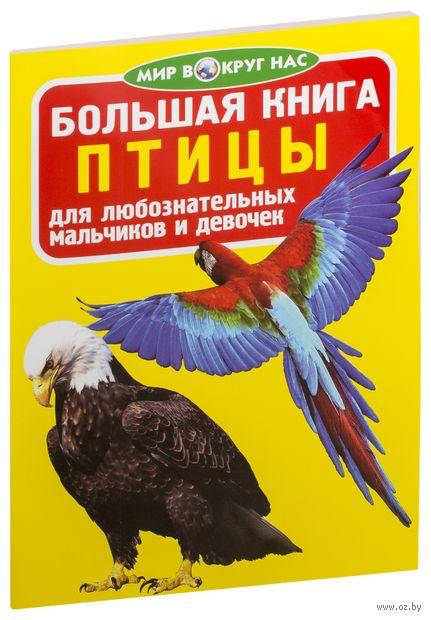 Большая книга. Птицы — фото, картинка