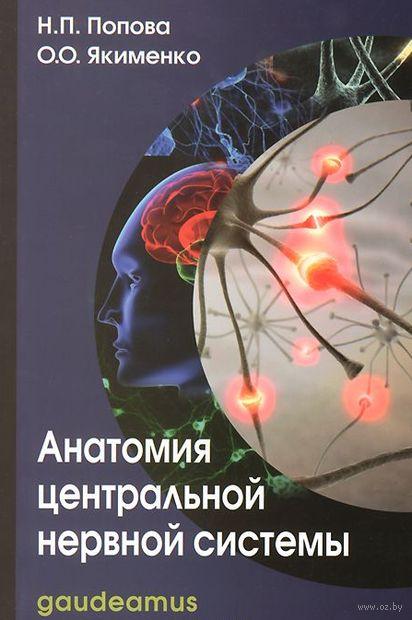Анатомия центральной нервной системы — фото, картинка