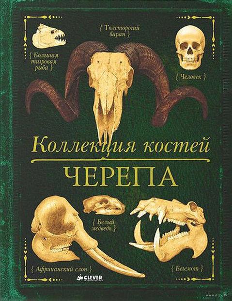 Коллекция костей. Черепа. Камила де ла Бедуайер
