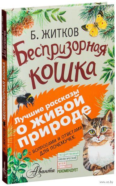 Беспризорная кошка — фото, картинка