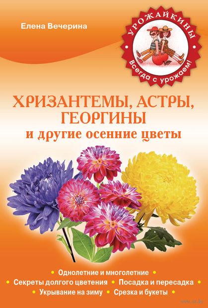 Хризантемы, астры, георгины и другие осенние цветы. Елена Вечерина