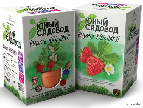 """Набор для выращивания растений """"Юный садовод. Клубника"""" — фото, картинка"""