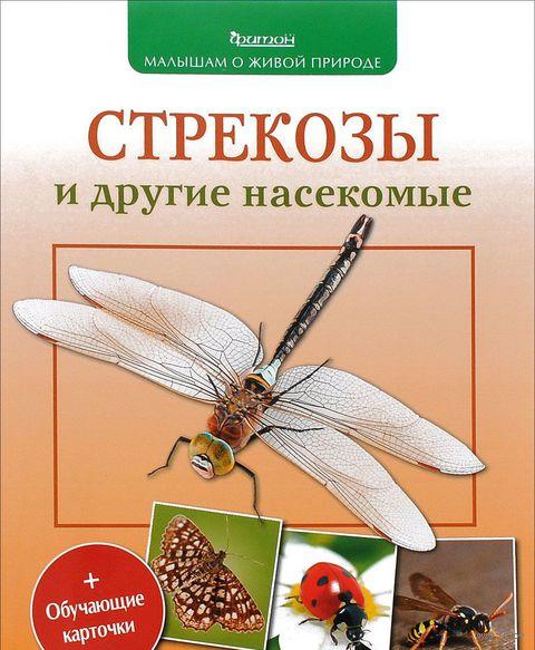 Стрекозы и другие насекомые — фото, картинка