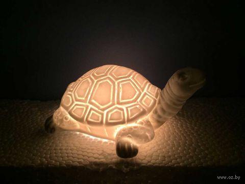 "Настольная лампа ""Черепаха"" — фото, картинка"