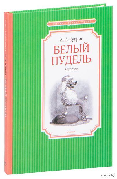 Белый пудель — фото, картинка