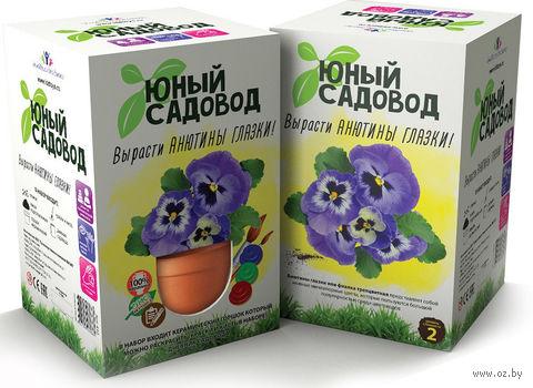 """Набор для выращивания растений """"Юный садовод. Анютины глазки"""" — фото, картинка"""