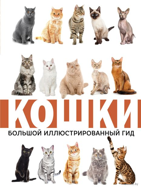 Кошки — фото, картинка