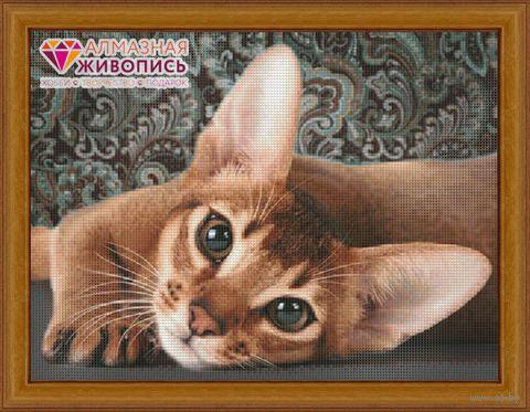 "Алмазная вышивка-мозаика ""Абиссинская кошка"" (400х300 мм) — фото, картинка"