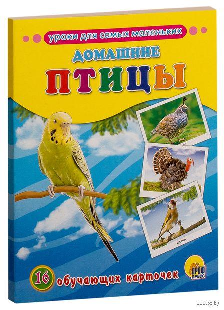 Домашние птицы. 16 обучающих карточек