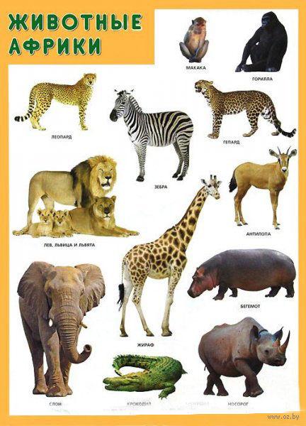 """Плакат """"Животные Африки"""""""