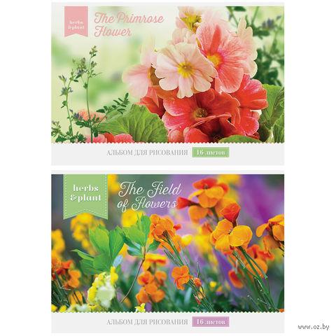 """Альбом для рисования А4 """"Цветы"""" (16 листов)"""