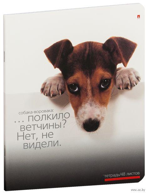"""Тетрадь полуобщая в клетку """"Приколы. Собаки"""" (48 листов; в ассортименте) — фото, картинка"""