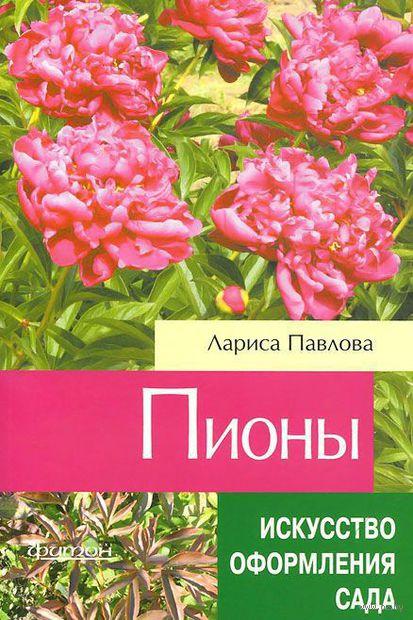 Пионы. А. Павлова