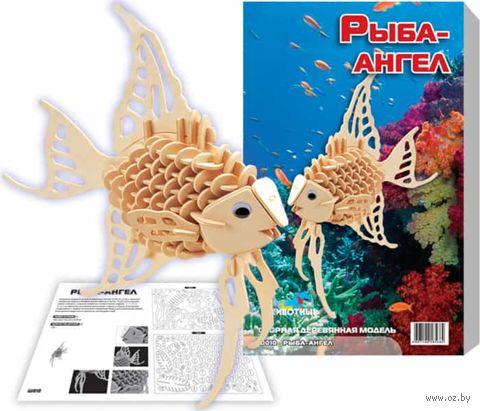 """Сборная деревянная модель """"Рыба-ангел"""" — фото, картинка"""