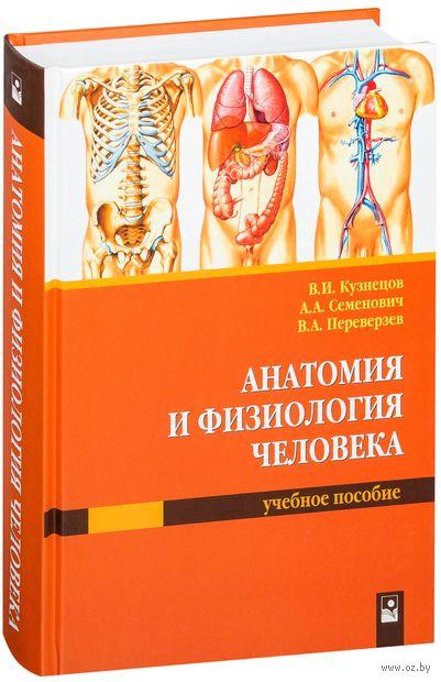 Анатомия и физиология человека — фото, картинка