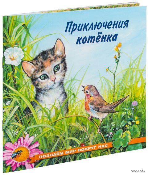 Приключения котенка — фото, картинка