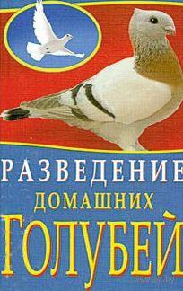 Разведение домашних голубей — фото, картинка