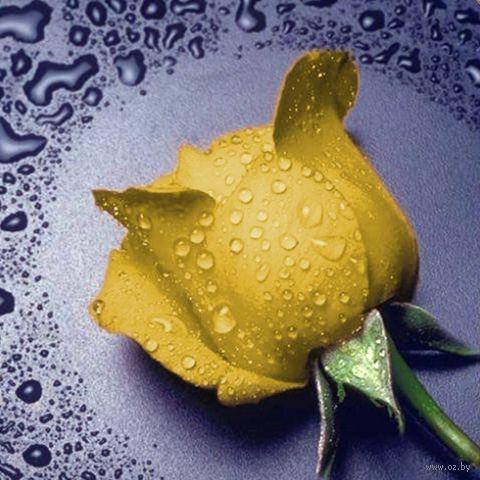"Алмазная вышивка-мозаика ""Желтая Роза"" (220х240 мм) — фото, картинка"