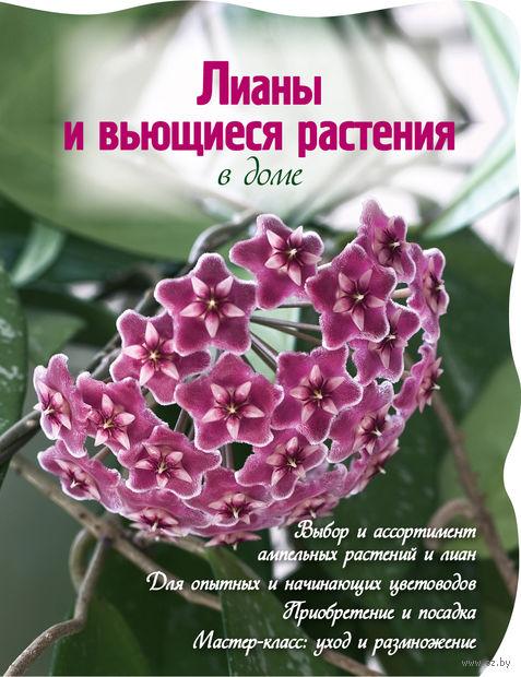 Лианы и вьющиеся растения в доме — фото, картинка