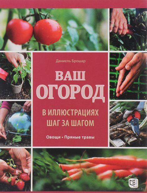 Ваш огород в иллюстрациях шаг за шагом. Овощи. Пряные травы — фото, картинка
