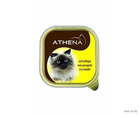 Консервы для кошек (100 г; домашняя птица) — фото, картинка