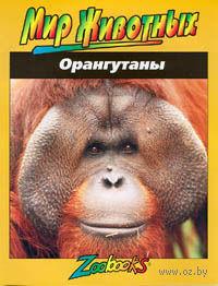 Орангутаны — фото, картинка